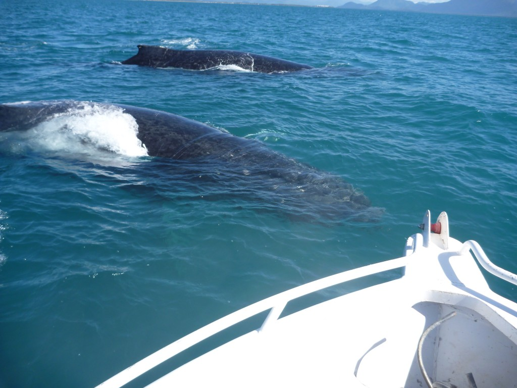 Whales (4)